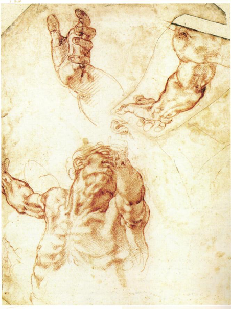 magen 8: Miguel Ángel, Estudio para la figura de Adán, 1511, Tylers Museum, Haarlem
