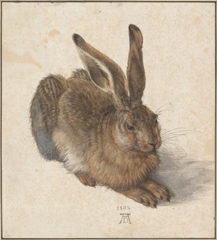 Imagen 21. Alberto Durero. Liebre, 1502. Acuarela. Viena Graphische Sammlung Albertina