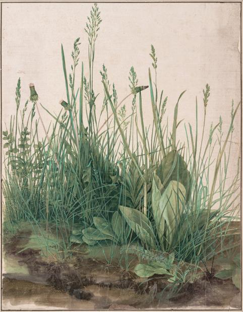 Imagen 18. Alberto Durero. Gran hierba, 1503. Viena Graphische Sammlung Albertina
