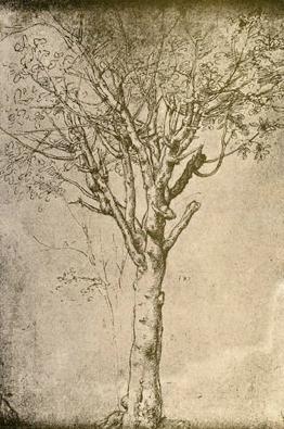 Imagen 17. Leonardo da Vinci. Dibujo de un árbol, 1500-1515