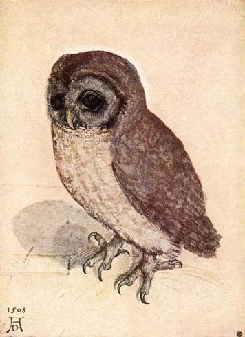 Imagen 20. Alberto Durero. Pequeño búho, 1508. Viena Graphische Sammlung Albertina