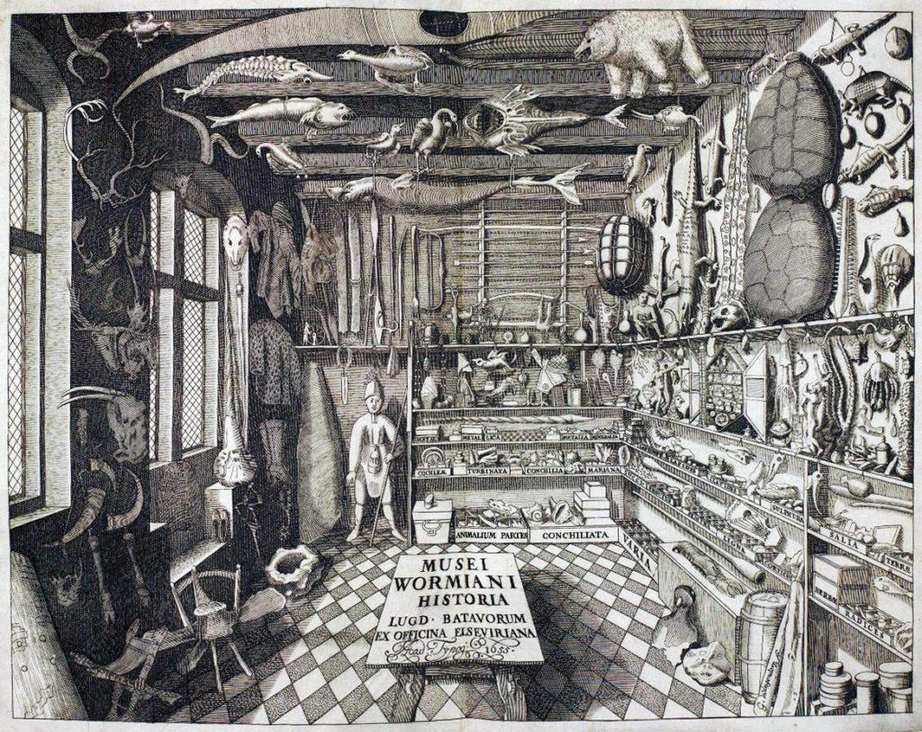 Imagen 2. Representación del museo de Ole Worm